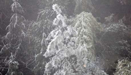 井冈山景点开放登山好去处 井冈山上雾凇奇景图片