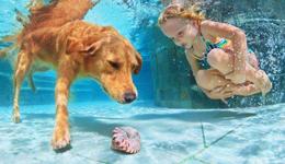 狗狗游泳可以游多久 夏季狗狗游泳注意事项