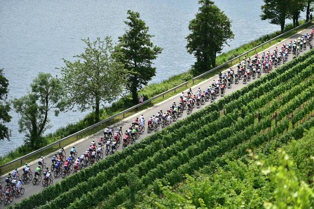 环法小知识:自行车赛为何分平路和山路赛段?