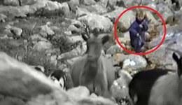 莫德里奇5岁时放羊照片被曝光